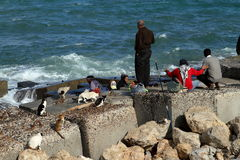 Angler on the Mediterranean in Alexandria Stock Photos