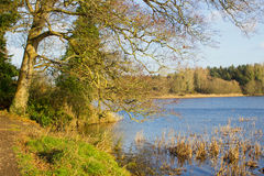 Angler`s fishing lake at Portavoe near Groomsport County Down Ireland. This is a popular spot for local walkers and with fishermen as the reservoir is Stock Photography