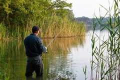 Angler. Standing in the lake and catching the fish royalty free stock photography