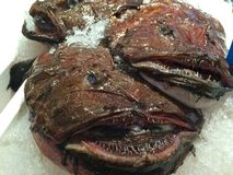 Anglerfish in Chinese fish market. How can you eat this? It tastes delicious however royalty free stock photos