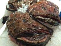 Anglerfish in Chinese vissenmarkt royalty-vrije stock foto's