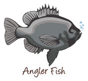 Anglerfish, Color Illustration Stock Photography