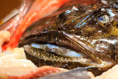 Anglerfish on Fish Market in Bergen. Norway Royalty Free Stock Photo