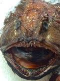 Anglerfish i kinesisk fiskmarknad Arkivfoton