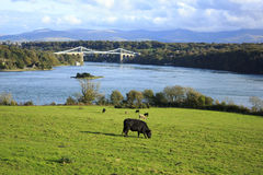 Anglesey Bridge Royalty Free Stock Photography