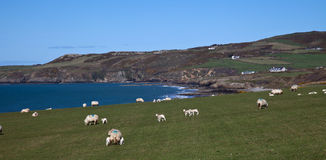 Anglesey Coastal Path. Typical view just south of Church bay Isle Anglesey North wales Stock Photography