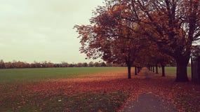 Anglia, d parkowy miasteczka pole Zdjęcie Stock