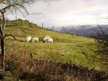 anglika krajobraz obraz stock