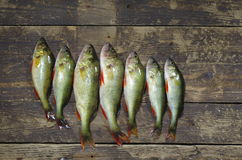Angling trophy Royalty Free Stock Image