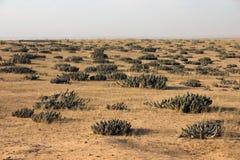 Angola krajobrazy Obrazy Stock