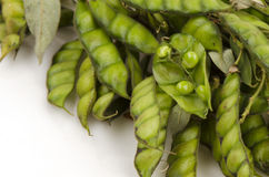 Angola Pea, Congo Pea Royalty Free Stock Photography