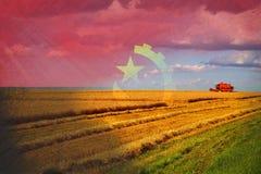 Angola rolnictwo, zbiera uprawy Zdjęcie Royalty Free