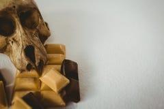 Angolo alto vicino su del cranio umano con le barre di cioccolato Fotografie Stock Libere da Diritti