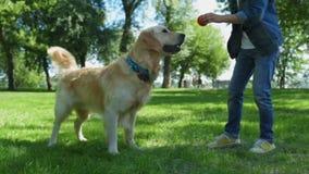 Angolo basso del ragazzino che gioca con il suo cane all'aperto stock footage