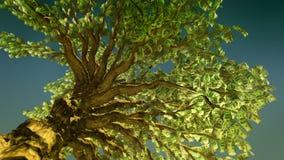 Angolo basso dell'albero dei soldi Fotografia Stock Libera da Diritti