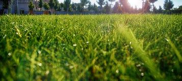 Angolo basso dell'erba immagine stock
