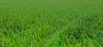 Angolo basso dell'erba fotografia stock