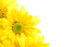 Angolo dei fiori Fotografie Stock