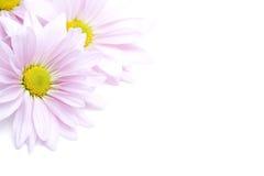 Angolo dei fiori Fotografia Stock Libera da Diritti