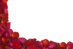 Angolo dei petali del biglietto di S. Valentino Fotografie Stock Libere da Diritti