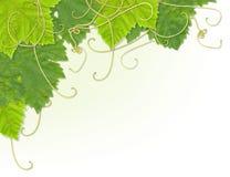 Angolo del foglio dell'uva immagine stock libera da diritti