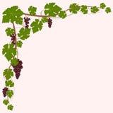 Angolo dell'uva rossa royalty illustrazione gratis