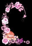 Angolo di rosa di colore rosa sul nero Fotografia Stock Libera da Diritti
