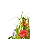 Angolo floreale del bordo fotografia stock libera da diritti