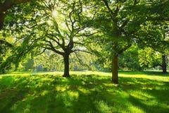 Angolo pittoresco in Hyde Park, Londra, Regno Unito fotografie stock libere da diritti