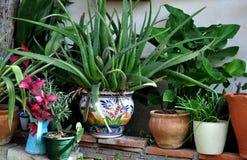 Angolo romantico del giardino Fotografia Stock Libera da Diritti