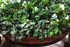 Angolo verde del giardino Fotografia Stock Libera da Diritti