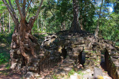 Angor wat temple distroyed by trees Stock Photos