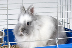 Angora bunny Royalty Free Stock Photo