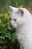 Angora cat profile Stock Images