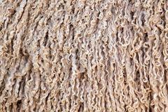 Angora goat wool background Stock Photography