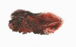 Painted guinea pig. An angora guinea pig with especially long fur painted in detail royalty free stock photography