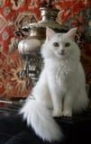 Angora- katt på samovar Royaltyfria Bilder