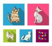 Angora turca, specie longhair ed altre britanniche Le razze del gatto hanno messo le icone della raccolta nelle azione piane di s Fotografie Stock