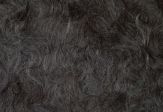 Angora wool Royalty Free Stock Photos