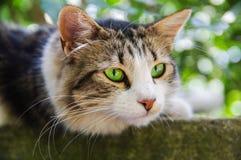 angoras млекопитающие Кот Стоковая Фотография