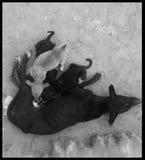 angoras Стоковые Фотографии RF