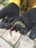 angoras Стоковые Изображения RF