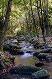 Angra alinhada por rochas e por árvores Foto de Stock