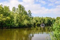 Angra, arbustos e árvores em uma reserva natural holandesa Fotografia de Stock Royalty Free