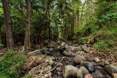 Angra 3 da floresta úmida foto de stock