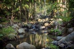 Angra da floresta úmida do campo fotos de stock royalty free