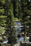 Angra da floresta Imagens de Stock Royalty Free