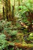 Angra da floresta húmida Fotos de Stock Royalty Free