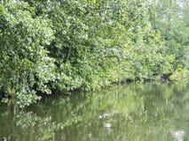 Angra da lagoa da floresta com árvores Fotografia de Stock Royalty Free