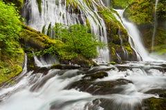 A angra da pantera cai em Washington State fotos de stock